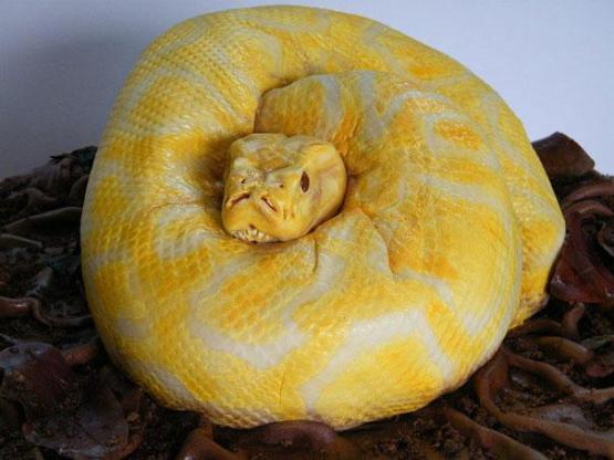gambar kue ulang tahun ular